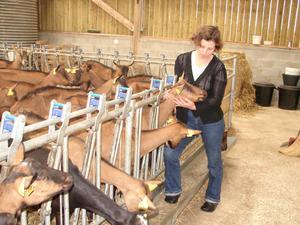 Sylvie Lhoste et ses chèvres alpines